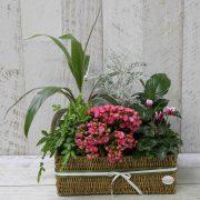 Seasonal indoor plants